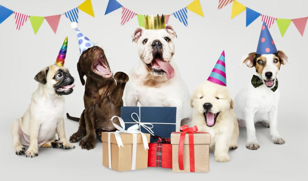 Cachorros de raças diversas com chapéus de aniversário