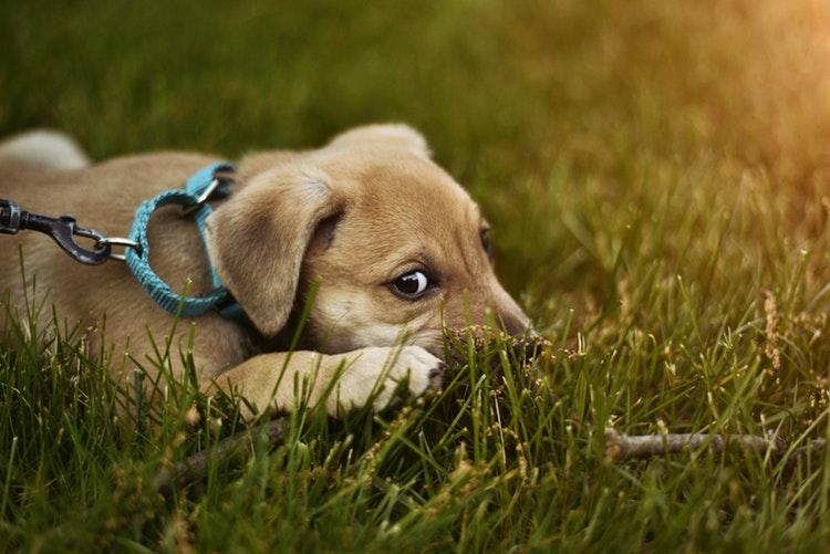 medos e fobias do cachorro
