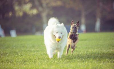 Como Acostumar Dois Cachorros a Conviverem Juntos