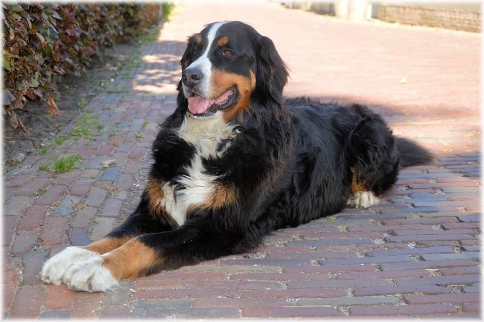 Comportamentos Dos Donos Que Aumentam a Desobediência do Cão