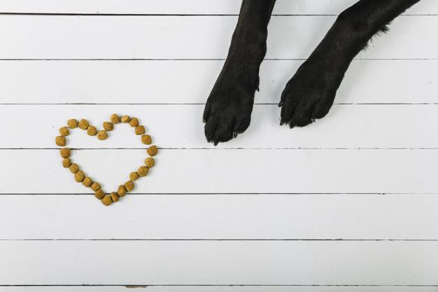 como fazer o cachorro comer devagar