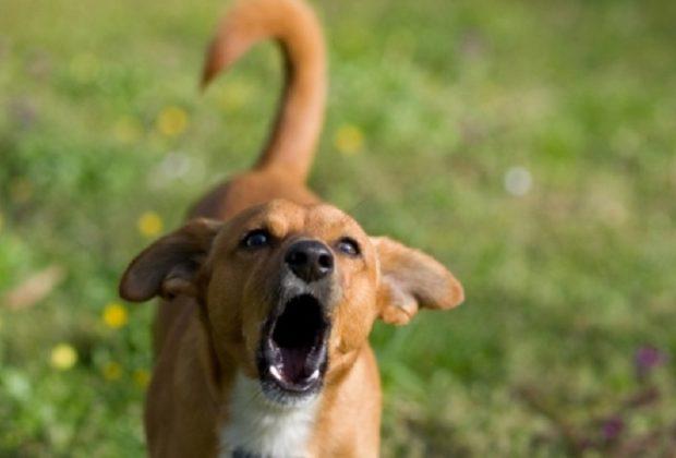Hoje, vamos entender como fazer o cachorro parar de latir e entender um pouco as principais motivações dele.