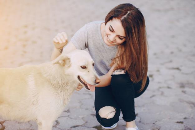 conversar com cães