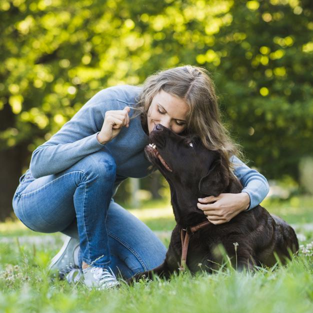 falar com cães