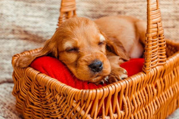 como fazer o cachorro dormir sozinho