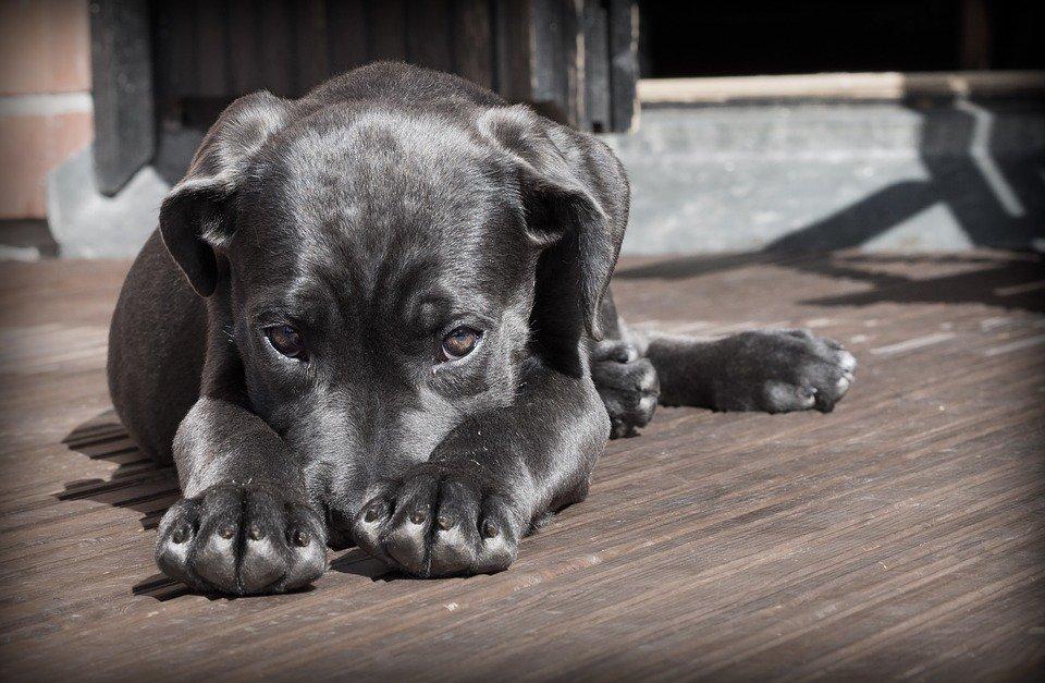 cachorro pode ter autismo
