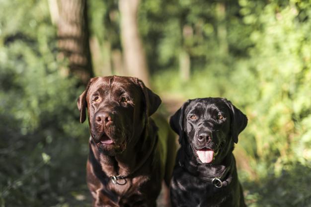 benefício de ter dois cães