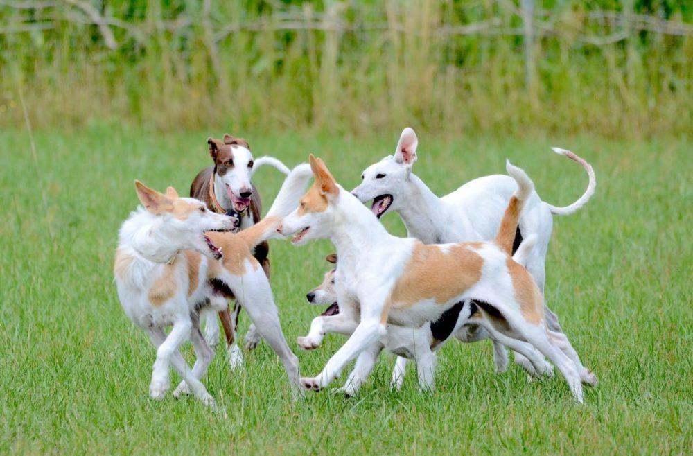 Grupo de cachorros brincando