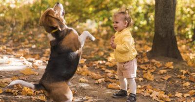 cães e criança