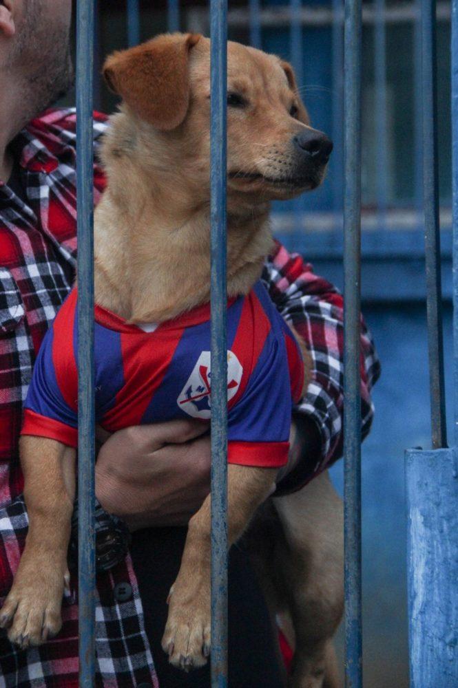 Cão Marujo