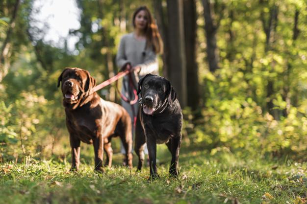 benefícios de ter dois cães