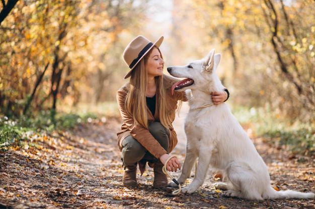 sinais que o seu cachorro adora você