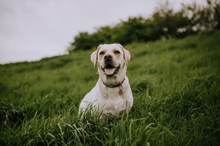 Exercitar seu cão em climas quentes