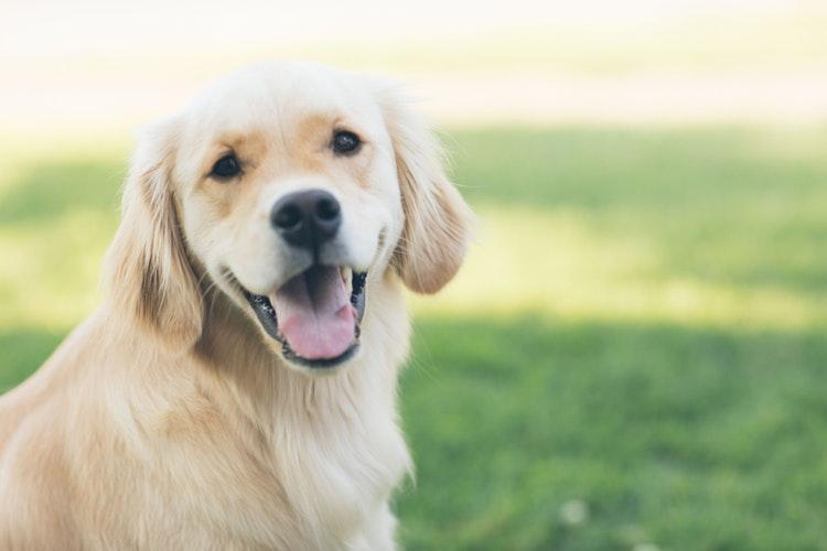 latido de cachorro