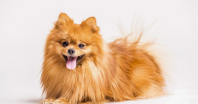 alimentos perigosos para cães