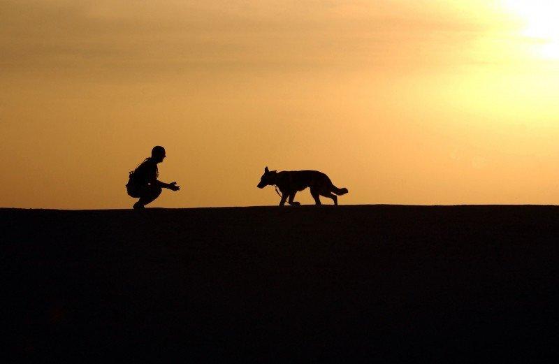 4 formas para acalmar o seu cão