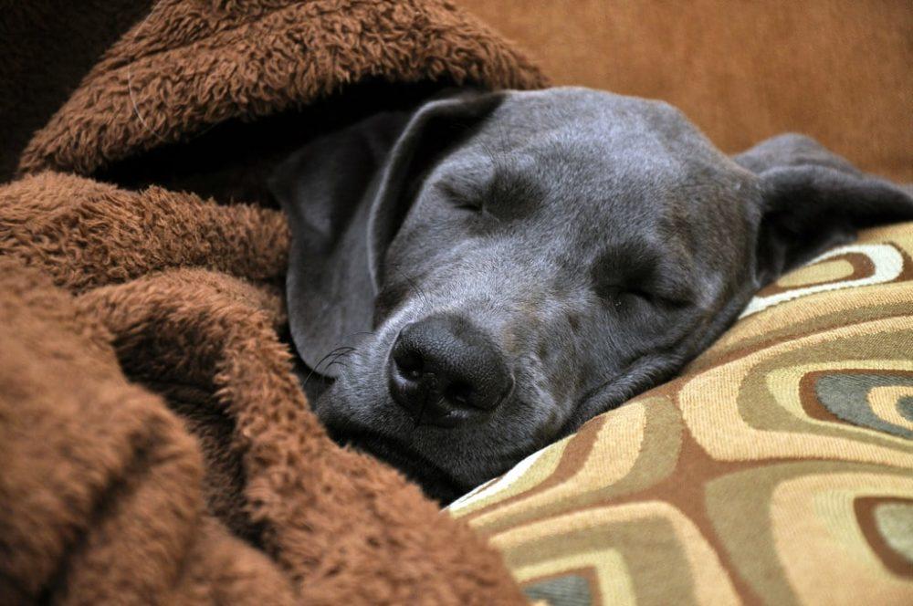 cachorro dorme muito