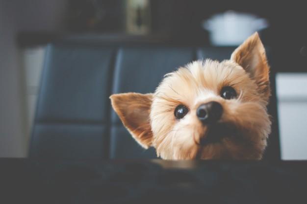 tosa em cães