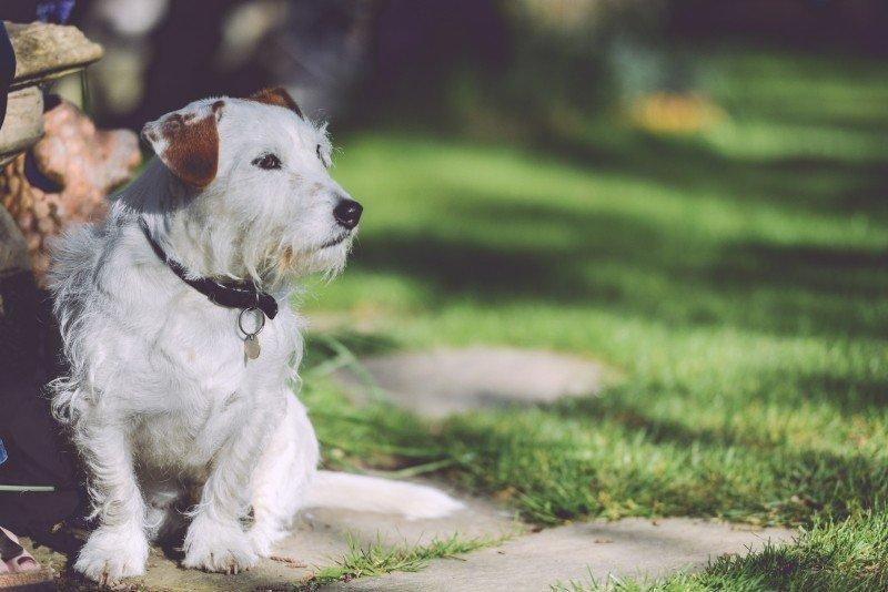 nomes de cachorros mais usados no Brasil