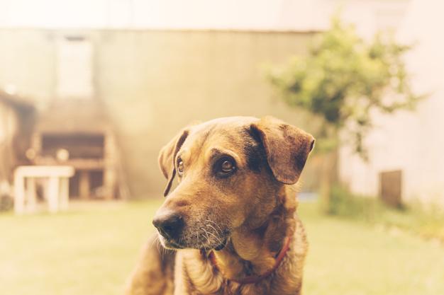Necessidades Básicas de Cães