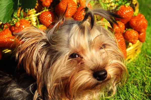 frutas e cachorros