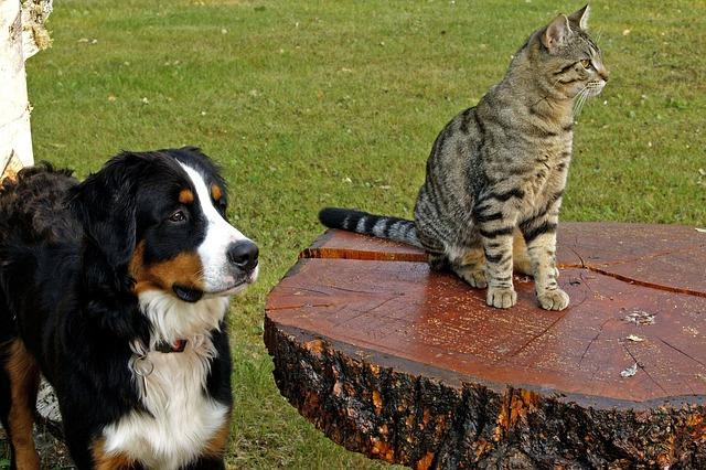 Criar Amizade Entre Cachorro e Gato