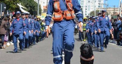 Cão de resgate Barney