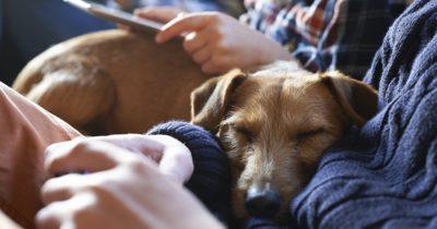 cão dorme