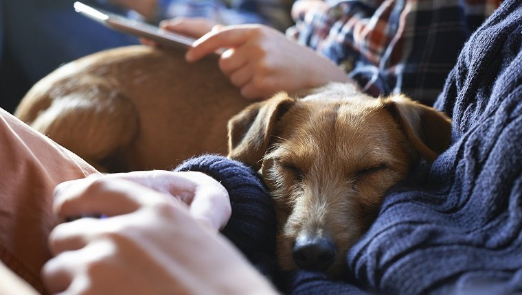 terapia com cães
