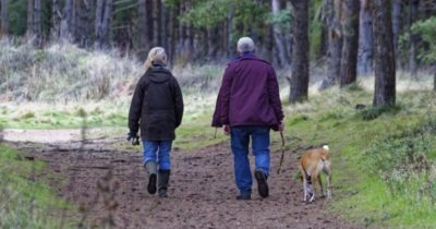 cães combatem o sedentarismo
