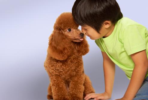 cachorro para pessoa alérgica
