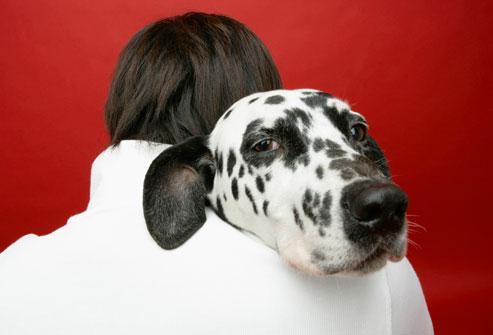 cachorro ideal