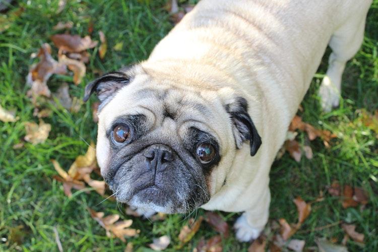 acalmar cachorro com medo de trovão