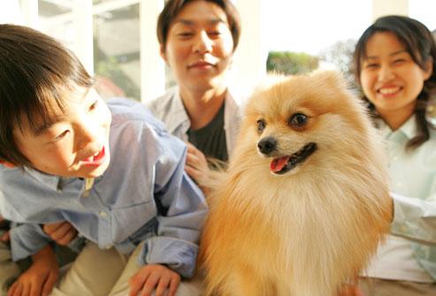 cachorro e pessoas