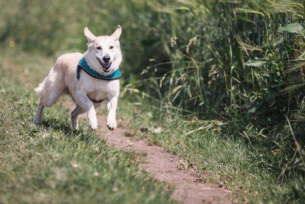 cães companheiros de corridas