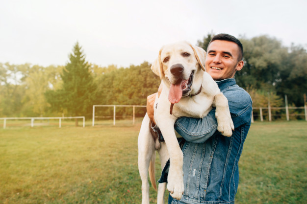 Demência em Cães
