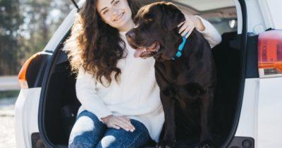 cães e donos
