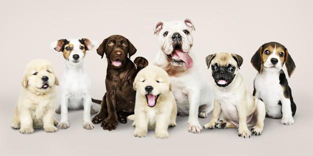como escolher o nome do cachorro