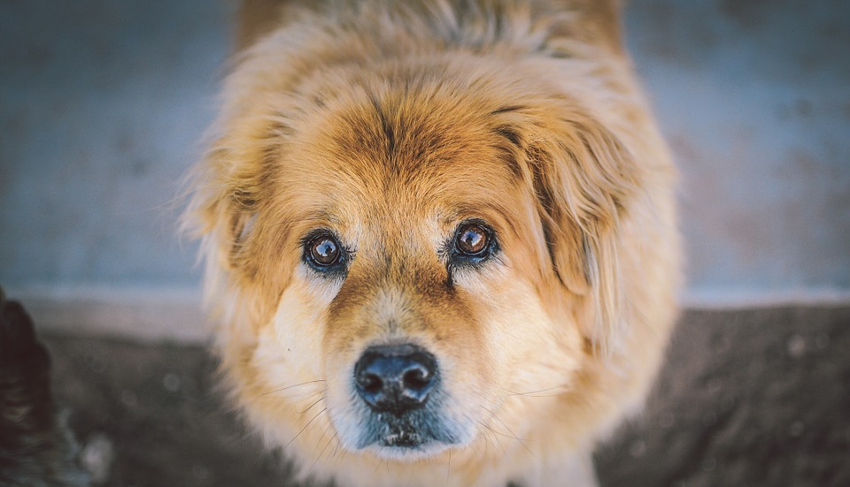 como evitar acidentes domésticos com cães