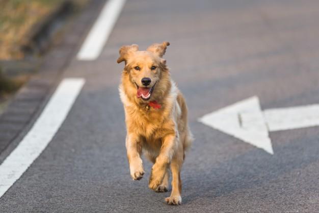correr com cachorro