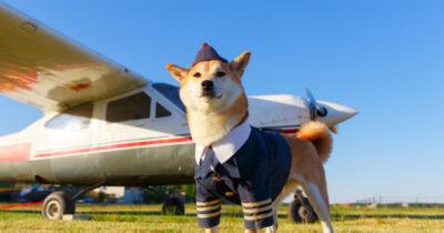 Conte com uma patinha para superar medo de avião