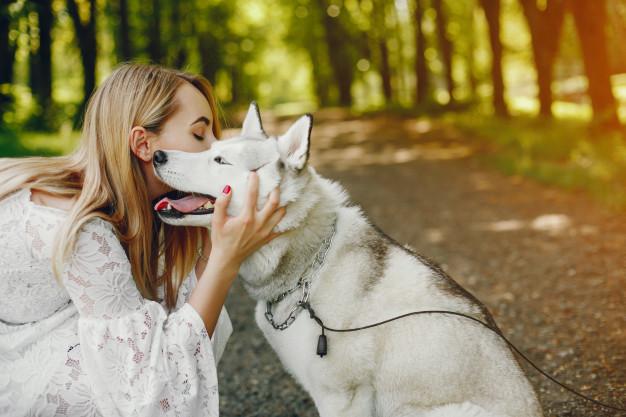evitar carrapatos em cães
