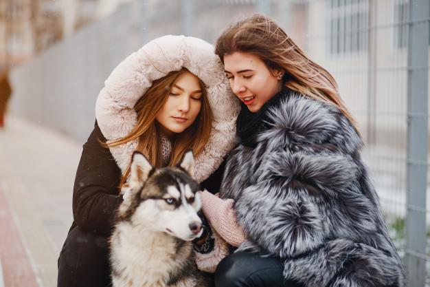 como proteger o cachorro do frio