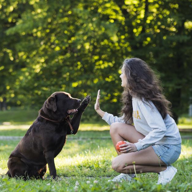 agressividade canina