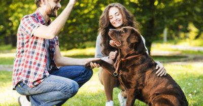Como escolher um cão de guarda