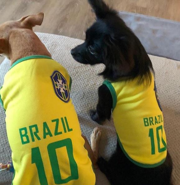 Chihuahuas Zoe e Zeca: as companhias favoritas da jogadora Marta. Foto: reprodução Instagram oficial Marta