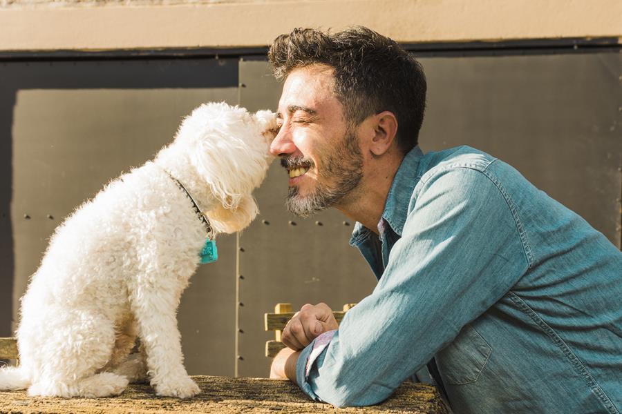 Campanha para achar cachorros perdidos é lançada em caixas de pizzas