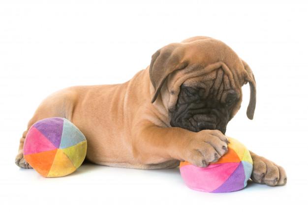 cachorros que mais babam