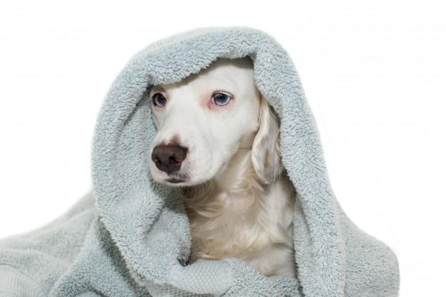 higiene em cães