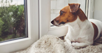 cachorro com medo de chuva